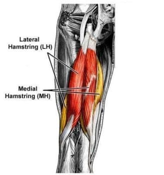 soma system® - The Must-Do Hamstring Move that You've Been ...