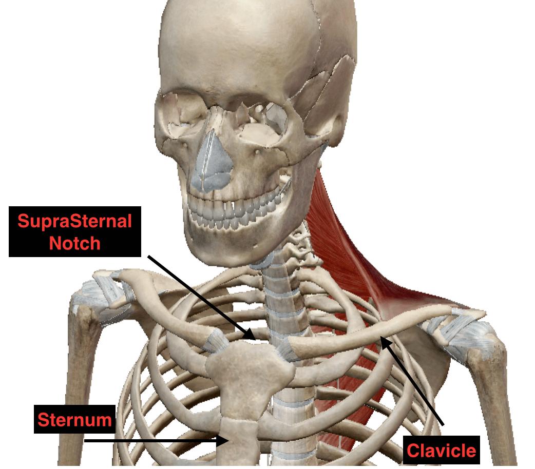 Anatomy Techniques Soma System