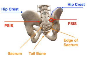 Bones 3 Hip Posterior