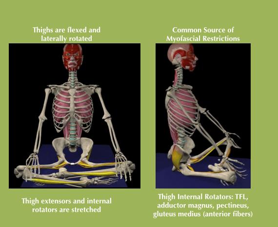 Soma System 174 Releasing Myofascial Restriction For Yoga Tfl